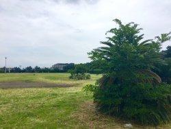 Kanagawa Prefectural Shonan Kaigan Park