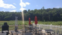 Arrigoni Winery