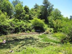 Sonoma Botanical Garden