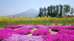 三島さんの芝桜庭園