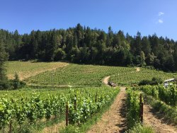 Porter-Bass Vineyard and Winery