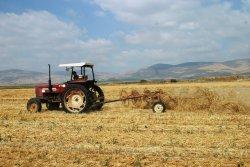 working in the organic wheat fields