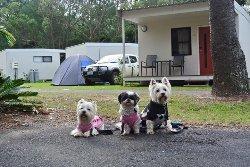 A DOGS PROSPECTIVE: Byron Holiday Park