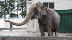 Obihiro Zoo
