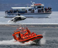 Western Prince Whale & Wildlife Tours