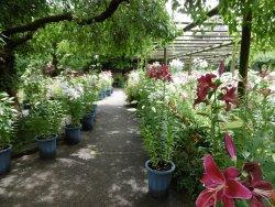 Hakozakigu Flower Garden