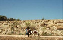 Dreams of Horses Farm