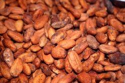 production de cacao avant d´aller à la cascade
