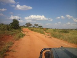 Gallo Safaris Kenya