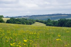 Ranscombe Farm Reserve