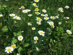 Pretty flowers on trail