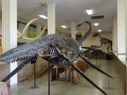 Museum of Geology