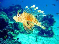 Triton Scuba Diving Centre Halkidiki