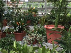 Liberty Hyde Bailey Conservatory