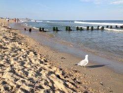 Belmar Beach
