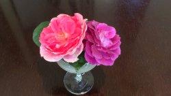 テーブルを飾るバラの花々(2016/07)
