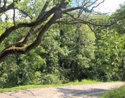 Parco di Villa Ghigi