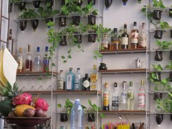 Hotel bar, decorated with little plants and always with a bowl of fresh fruit ready for juicing