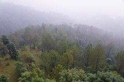 Chail Wildlife Sanctuary