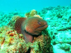 Scuba Quest Dive Center Kamala
