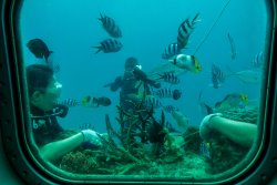 """Untrained """"Divers"""" Hanging onto the Coral"""