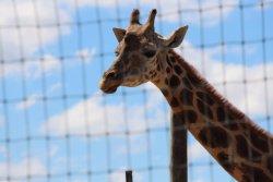 Bayou Wildlife Zoo