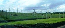Fujigouchi Tea Plantation