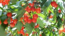Hanagasa Kanko Fruit Farm