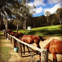 Jo's Ark Trail Riding & Equestrian
