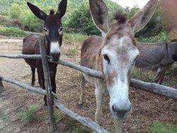 Skiathos Donkey Club