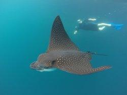 Galapagos Fan Dive
