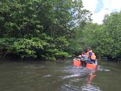 Bintan Mangrove Green - Day Tours