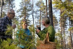 Essense of Lapland