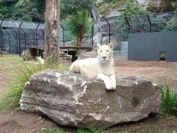 Shoalhaven Zoo