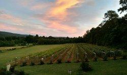 Red Heifer Winery