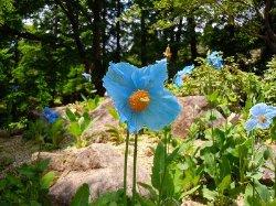 Rokko Alpine Garden