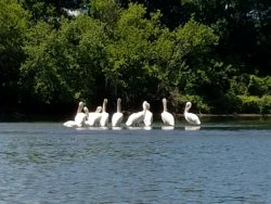 White Pelican Canoe & Kayak Rental