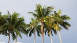 Just love the palm trees = we don't have them in the midwest!