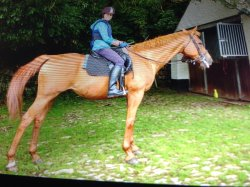 Outovercott Riding Stables