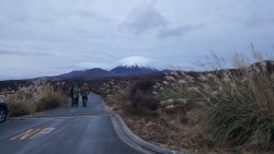 View of Ngauruhoe from the car park