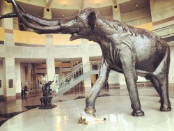 Sam Noble Oklahoma Museum of Natural History