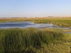 Humedal del Río Lluta