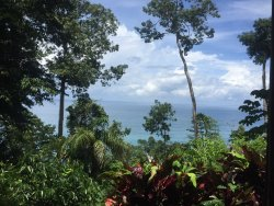 amazing pristine private rainforest!