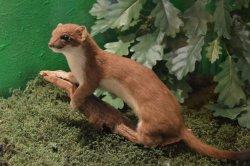 Musée faune lorraine