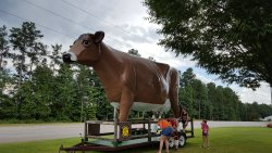 The Mayfield Cow