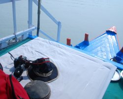 Discover Sundarbans Private & Day Tours