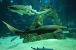 Biarritz Aquarium