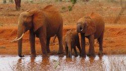 3 fantastische safari dagen