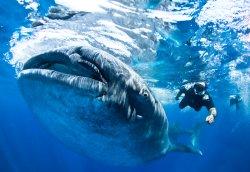 Blue H2o Cozumel Ocean Tours