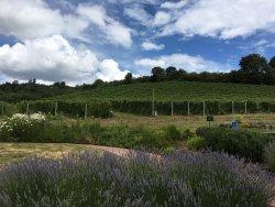 REX HILL Winery & Vineyards
